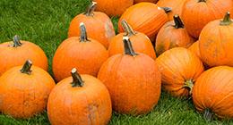 Pumpkin Launch